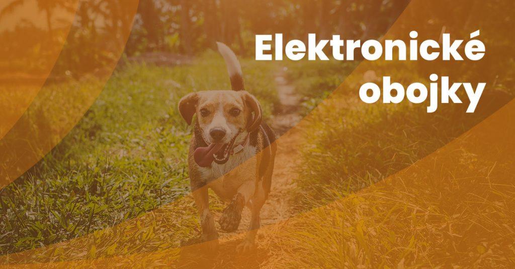 12 Elektronicke Obojky